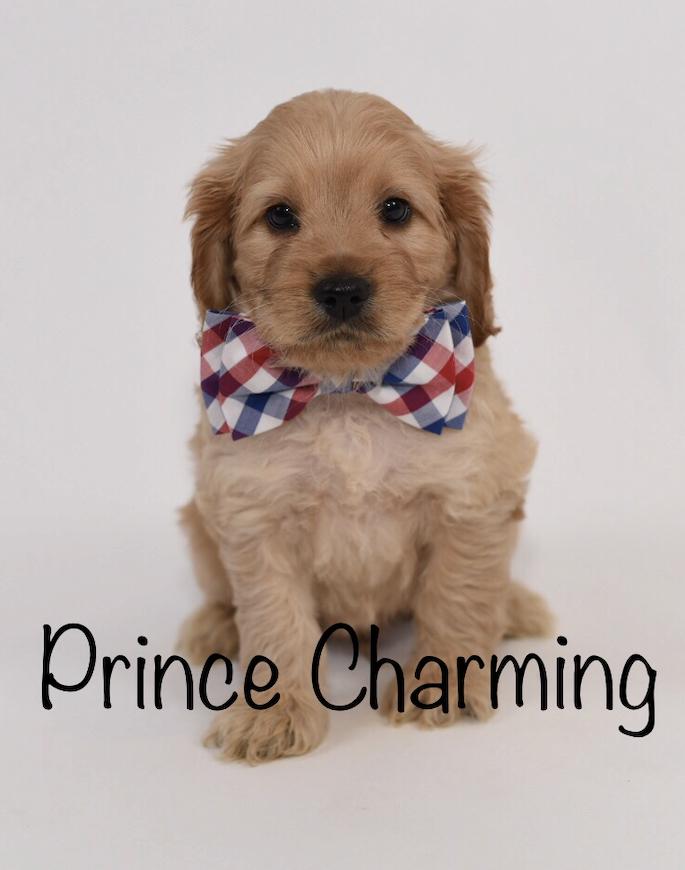 princecharming6weeks.jpg