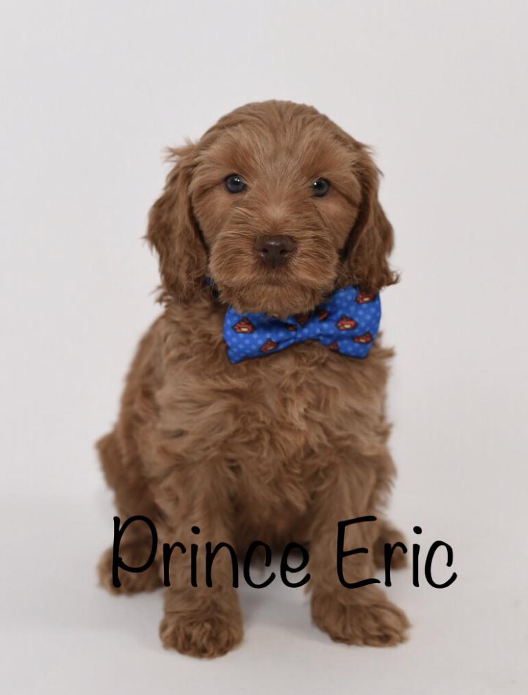 princeeric6weeks.jpg