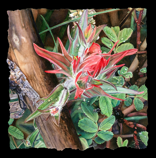 CastillejaIntegra8x8watercolor.jpg