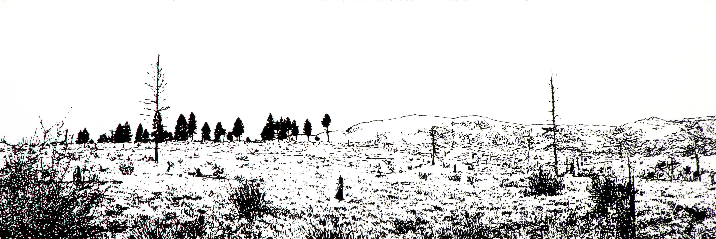 """Sequestered Smoke""  ink drawing on paper  16"" h x 42"" w  framed  The drawing is animated with animals of the Hayman Fire burn area  returning to their habitat. It can be animated or not.  (contact the gallery for more information)"