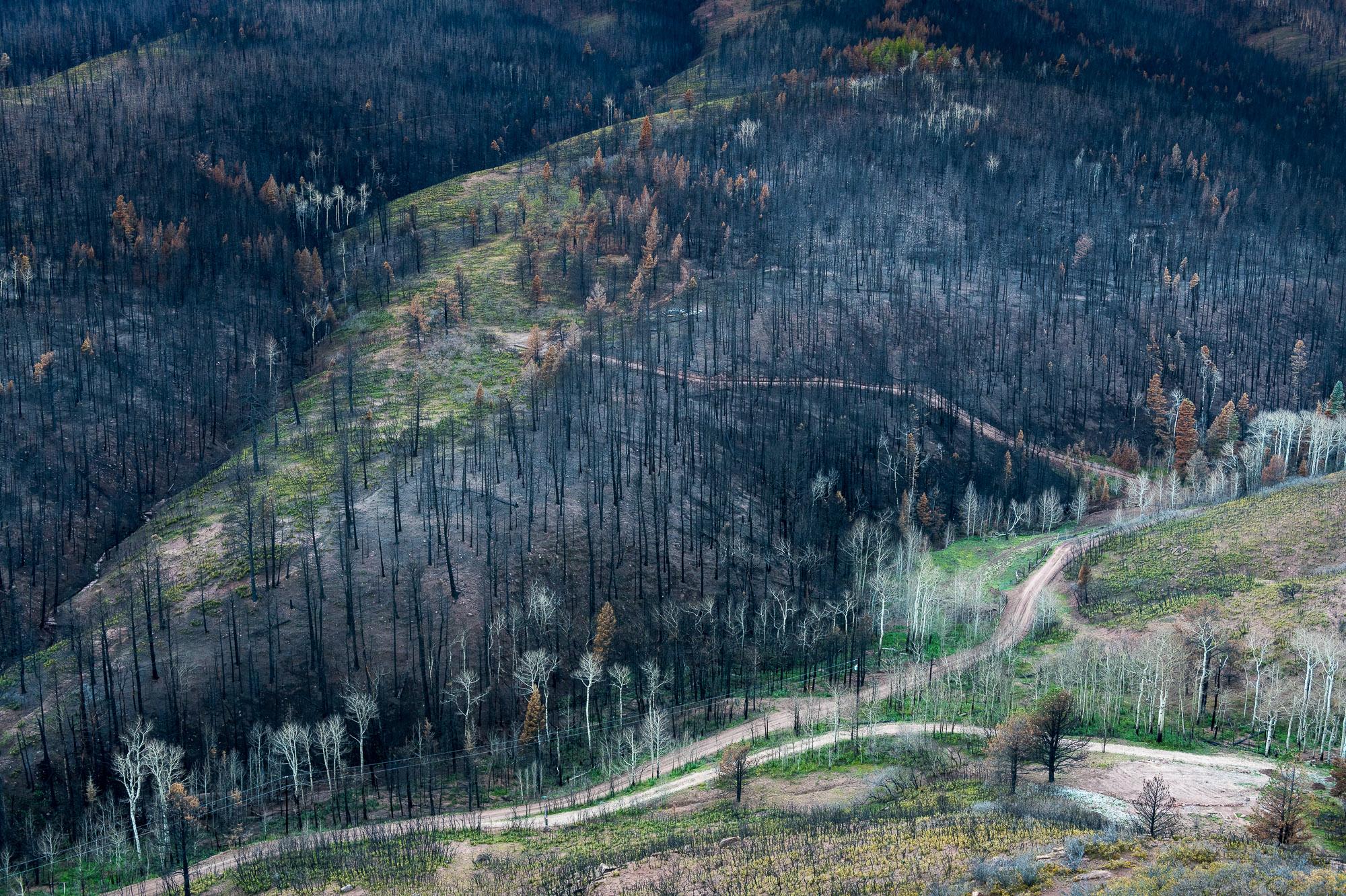 """""""Spring Creek La Veta Pass""""  #32  2018"""