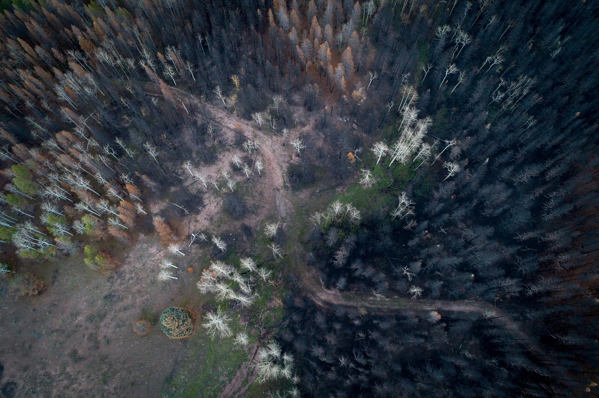 Spring Creek Fire La Veta Pass #195  2018