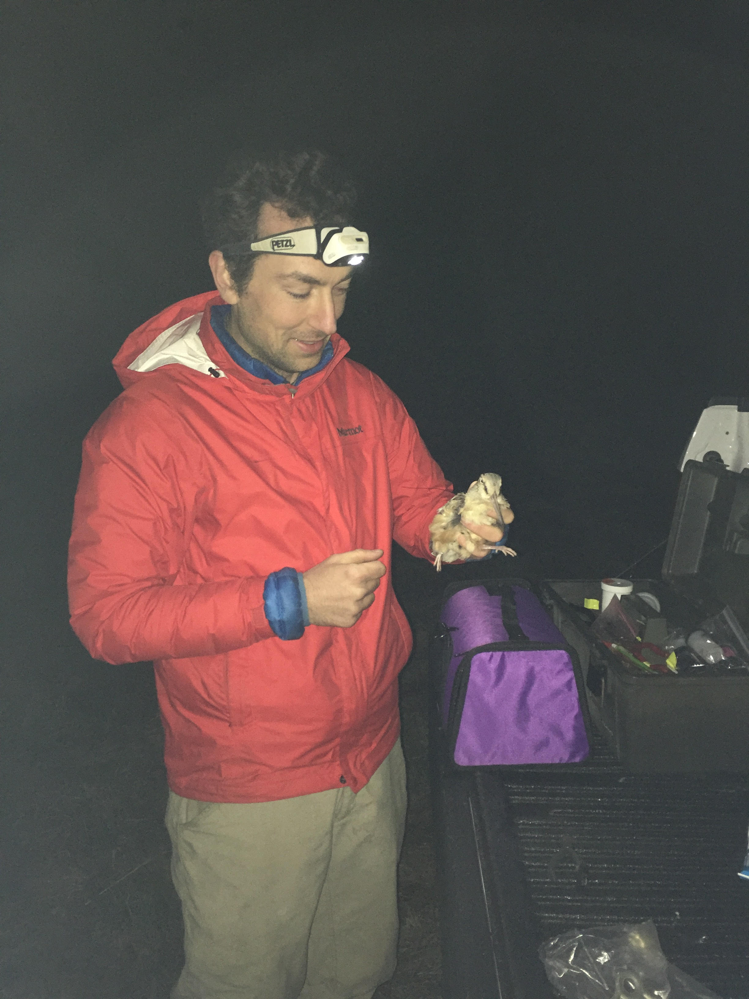 Clay Graham is a master's student studying the annual cycle movements of Rhode Island breeding American Woodcock, and how body condition affects fall migratory movements in  Scott McWilliams lab  at the University of Rhode Island  Photo credit Patrick Woodward