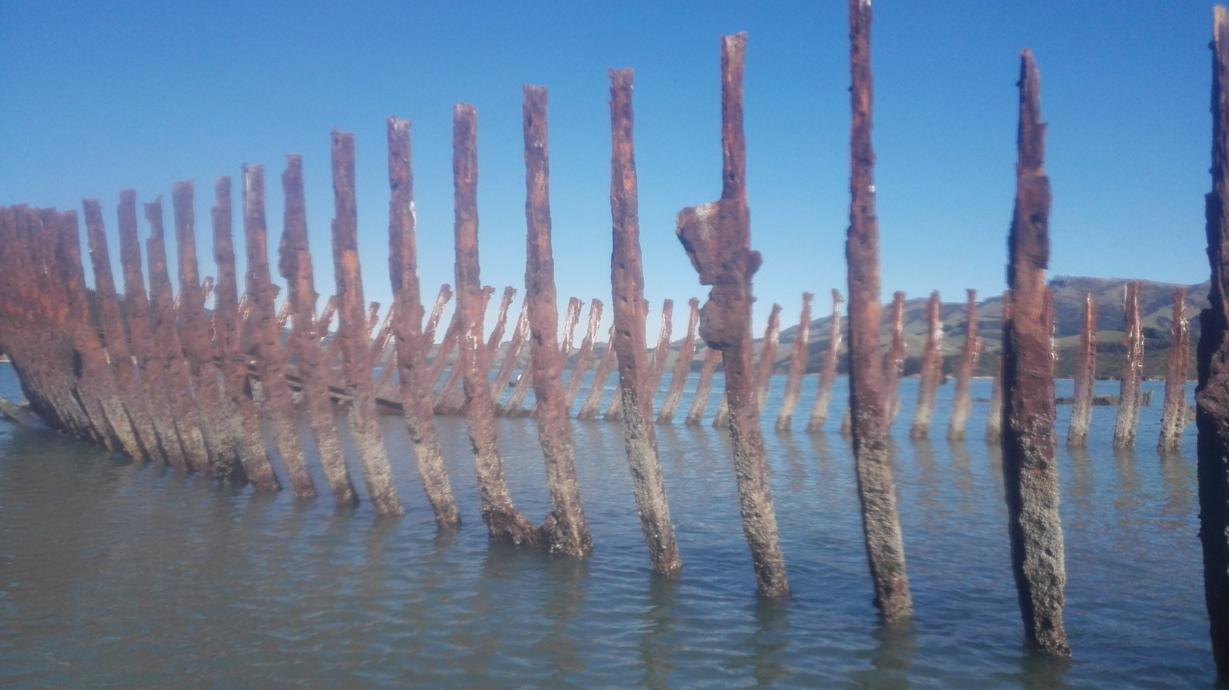 5-wreck-Quail-Island-Lyttelton.jpg