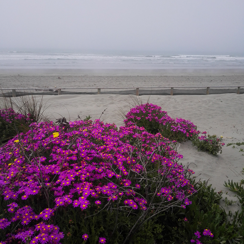 South Brighton beach on a sea misty day in Christchurch