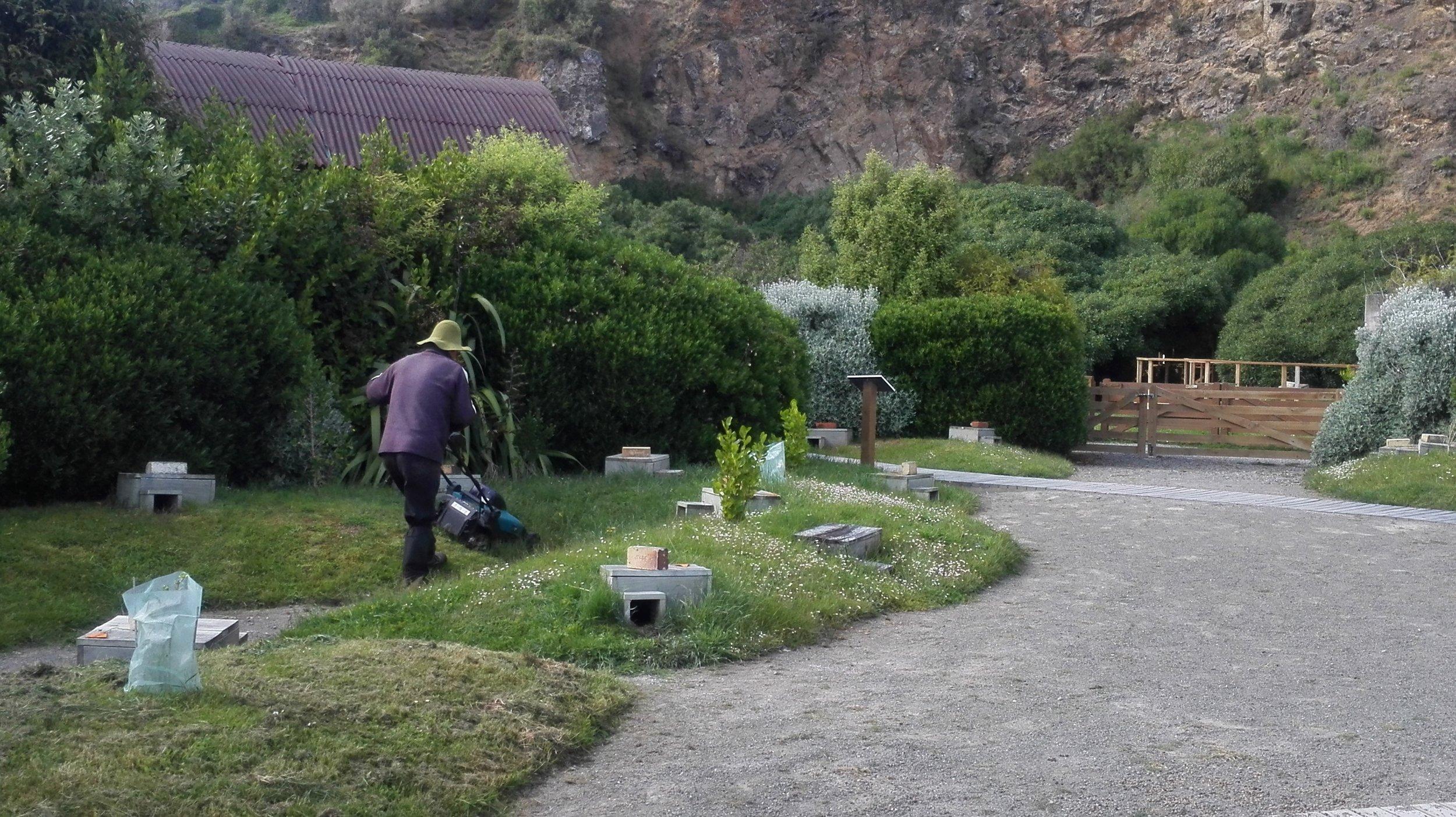 oamaru-penguin-3-gardener.jpg