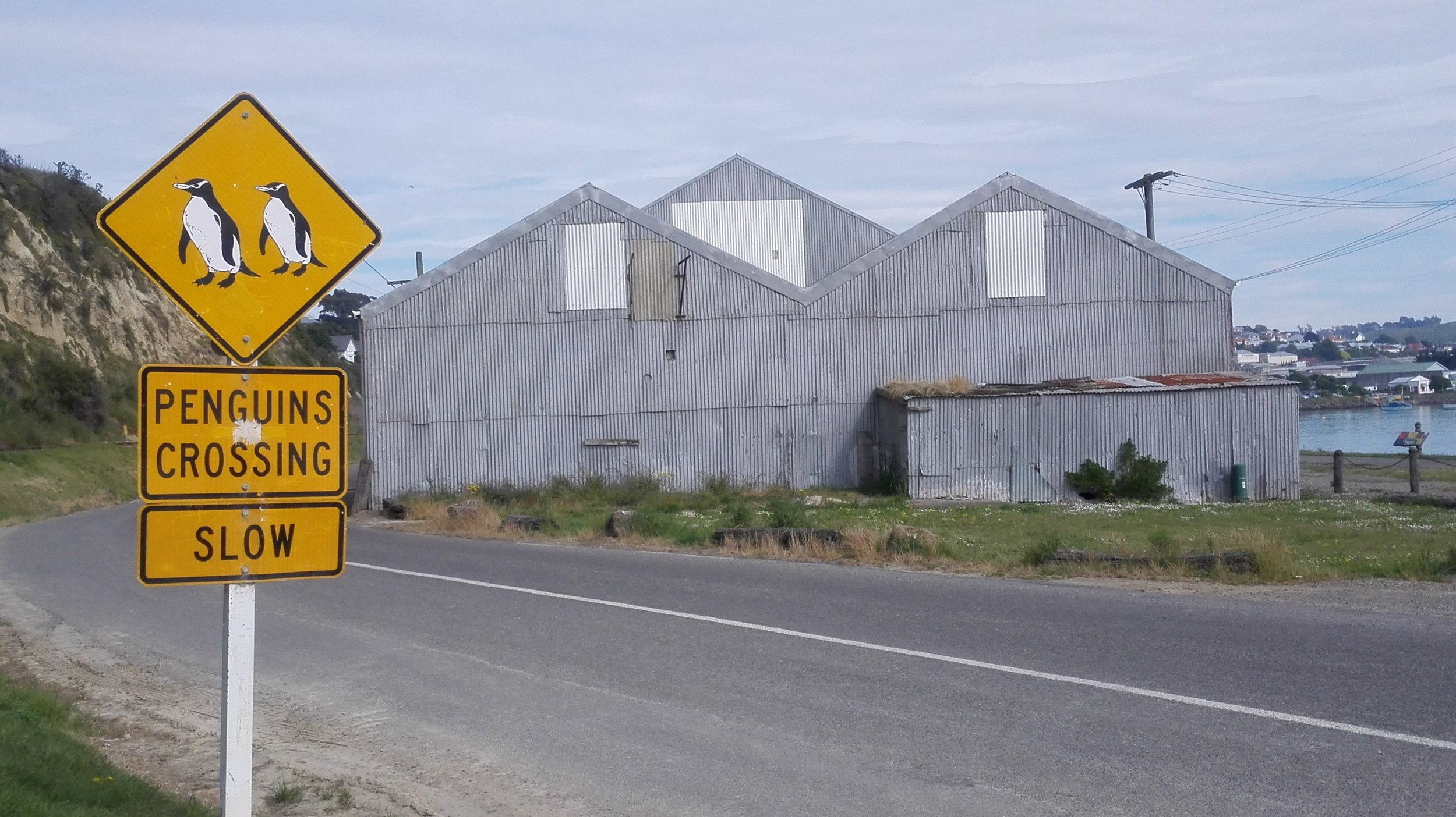 Oamaru-corrugated-penguin-sign.jpg