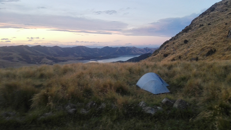 Camping at Sign of the Packhorse - looking out over Lyttelton Harbour