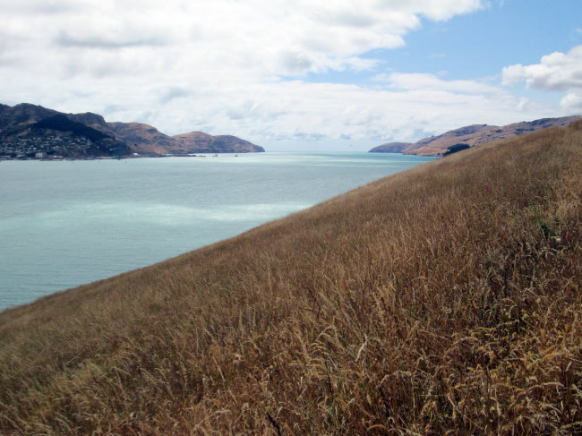 Living in New Zealand: Being a DOC Hut Warden on Ōtamahua/Quail Island — Alex Hallatt