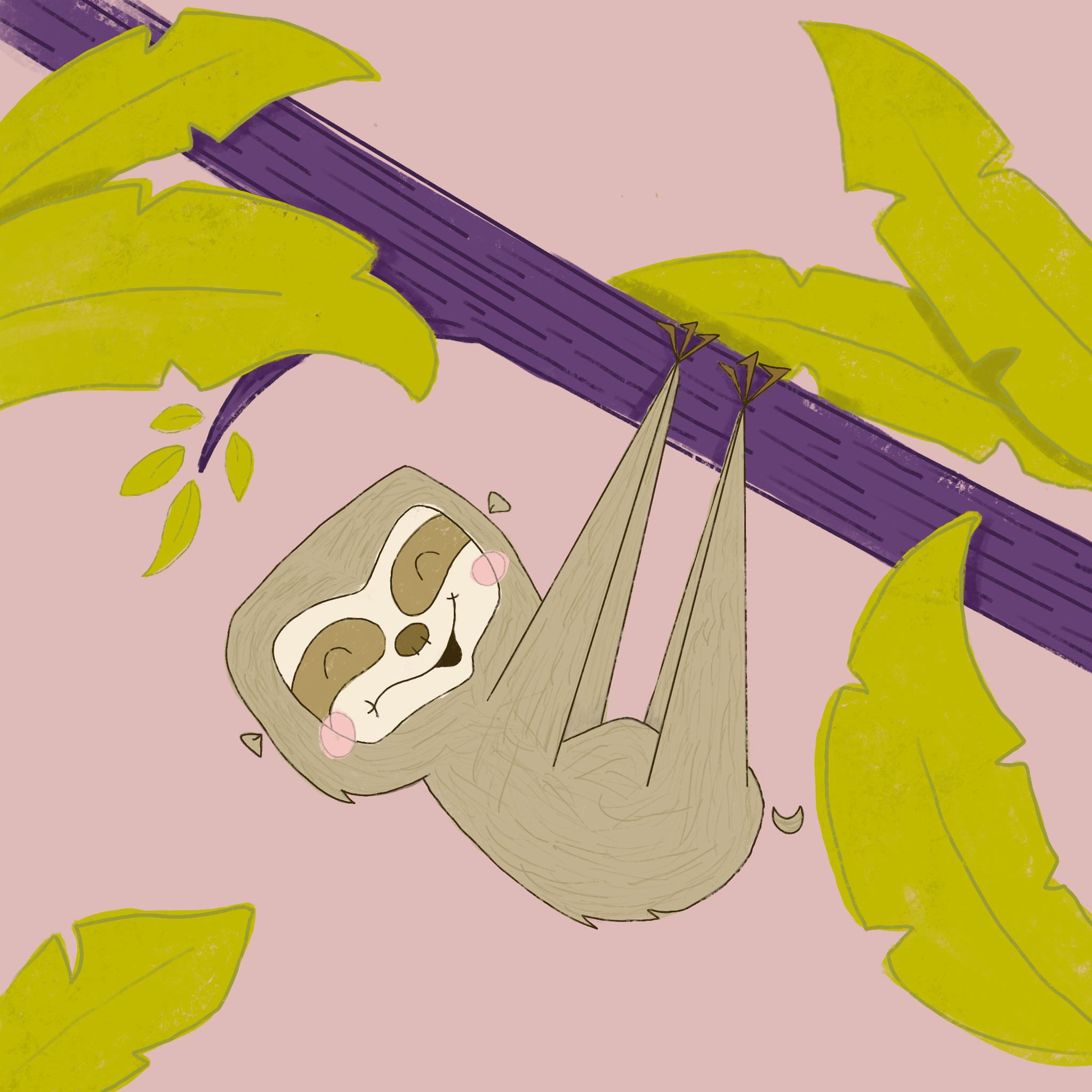 Kid Illustration Cute Sloth