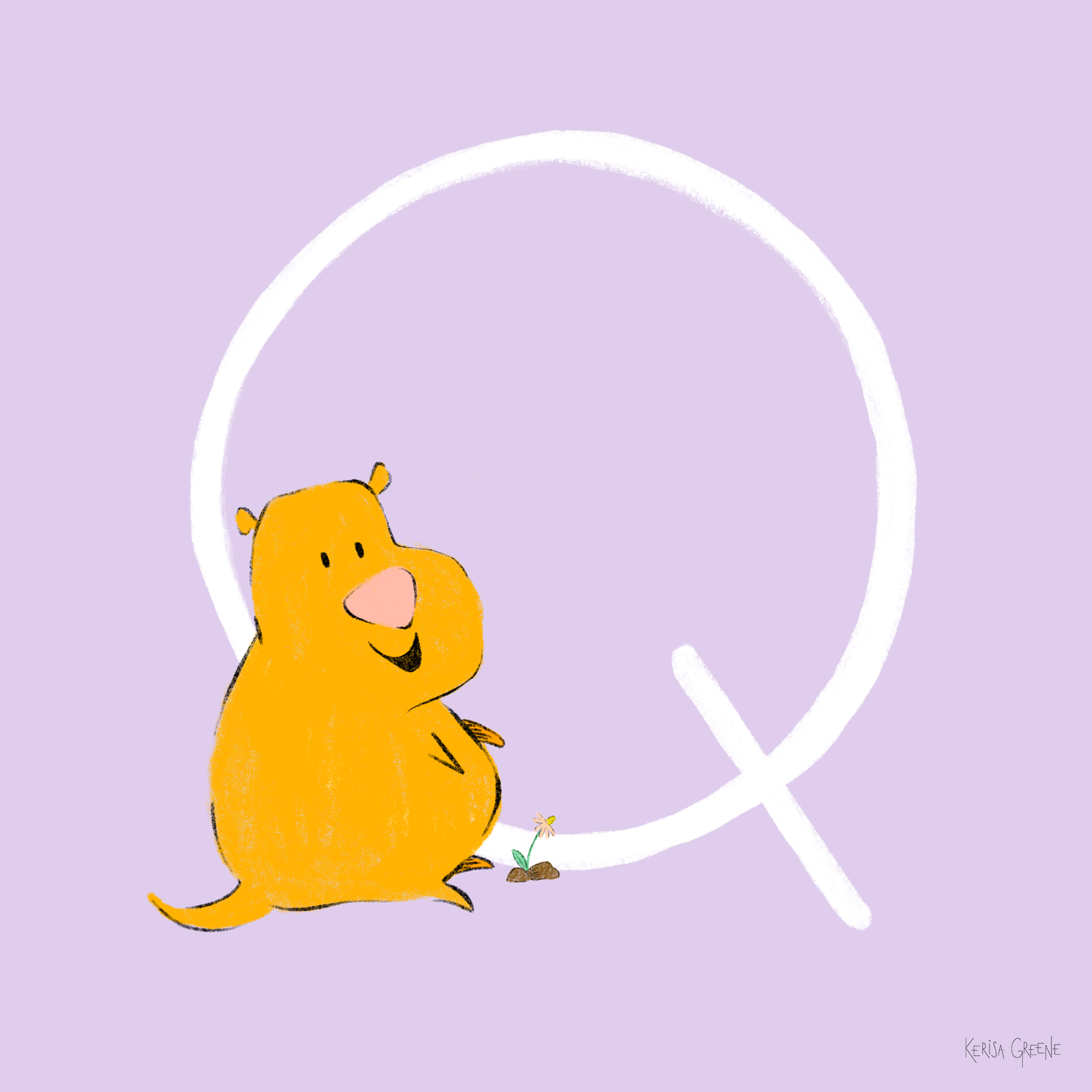 Q is for Quokka   The happiest animal in the world! These nocturnal animals are the only land mammal on Rottnest Island.