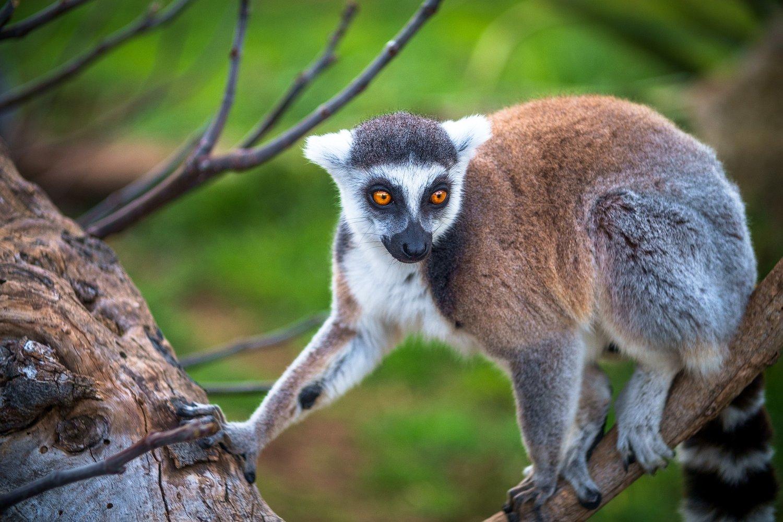 Madagascar | Daventure Tours | Things to do in Madagascar