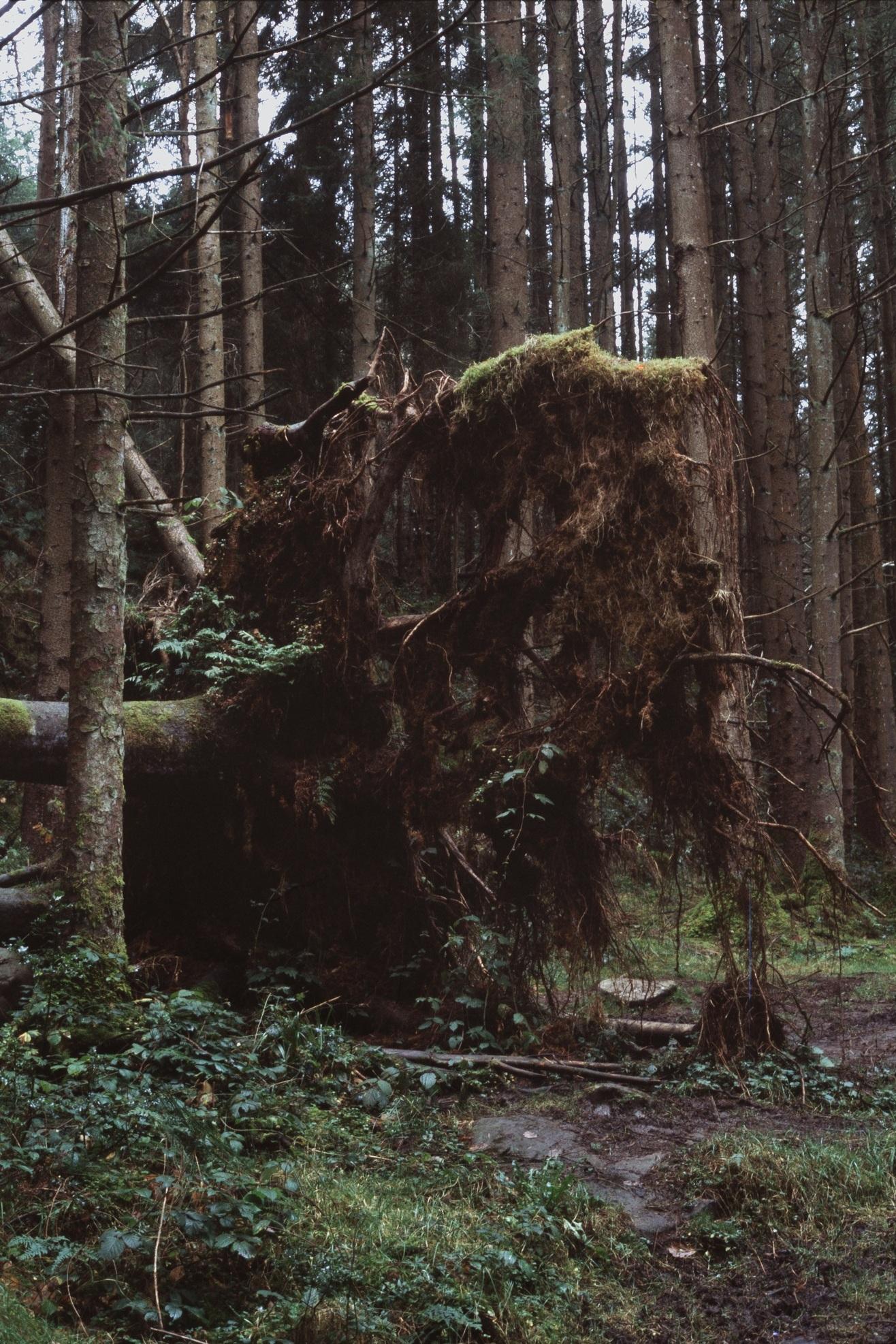 001: Moss -