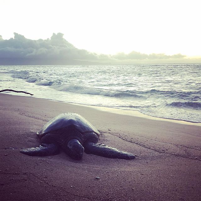 Ocean = soul cleanse.  Last night we stumbled upon this ancient treasure.