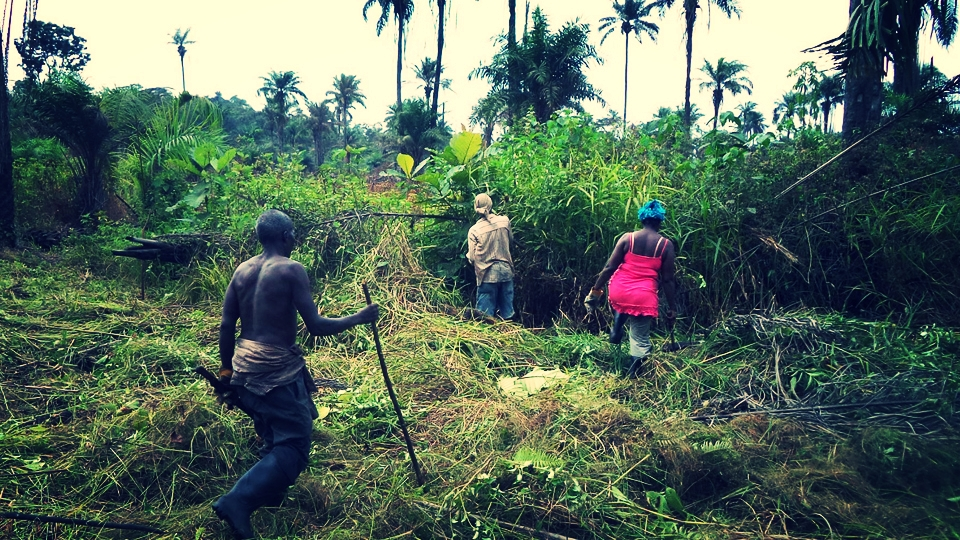 SEED Farm Land Clearing