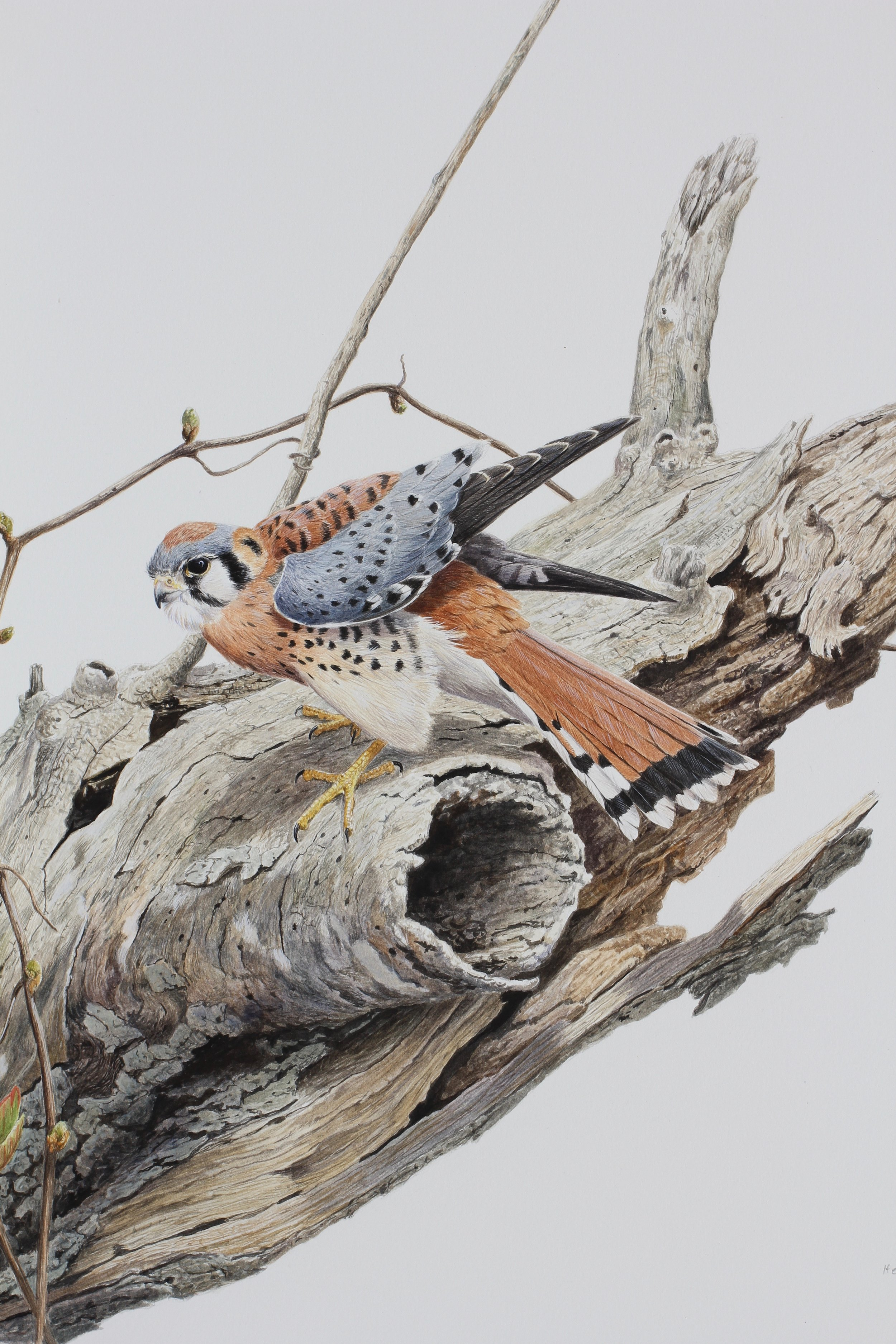 aBOUT - Tony Henneberg paints in various media, primarily watercolor and oils.Born in Germany, raised in Zimbabwe, and educated in South Africa, Tony Henneberg grew up in rural settings where he developed the keen interest in the wildlife surrounding him wherever he goes.