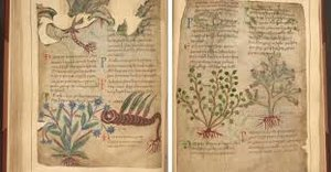 medieval-herbal.jpg