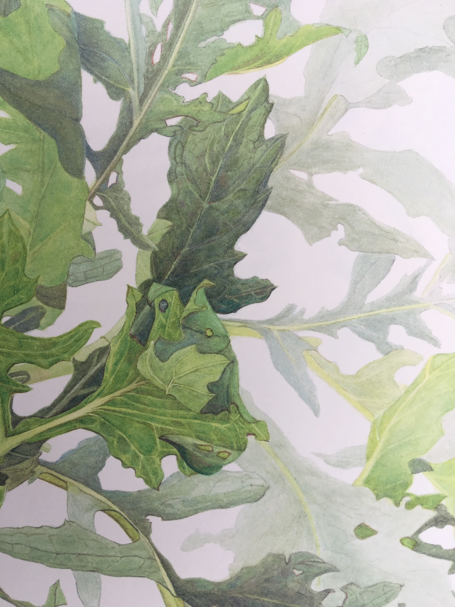 Details from Tartar Cabbage or Steppe Kale