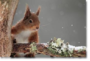 RS snow.jpg