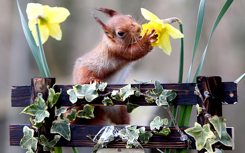Spring squirrel shot.jpg