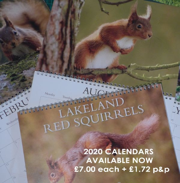 To order a calendar email to:   calendars@westmorlandredsquirrels.org.uk