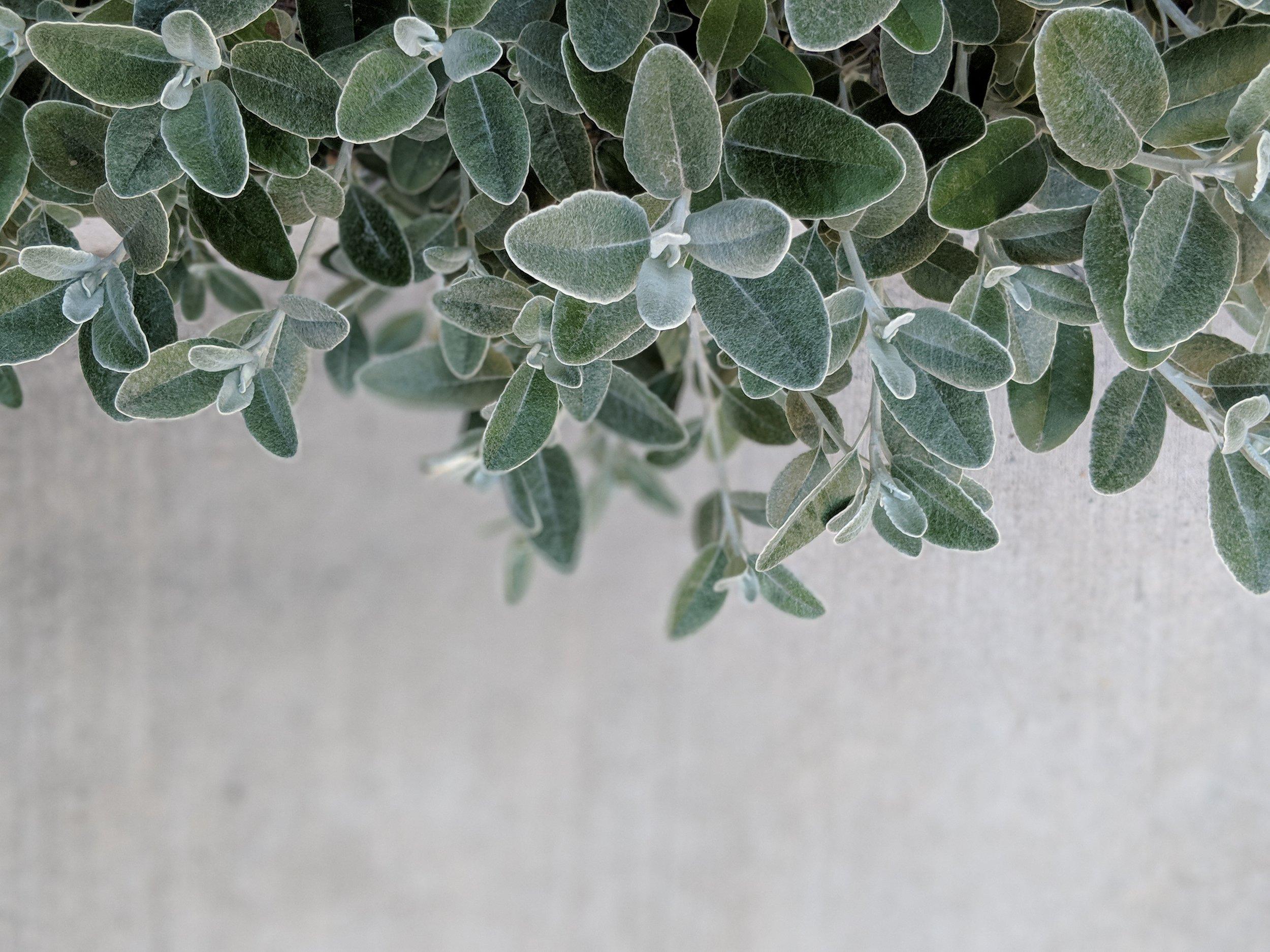 leaf image_02.jpg