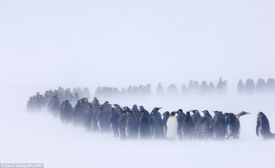 Actual photo of the bag check line.