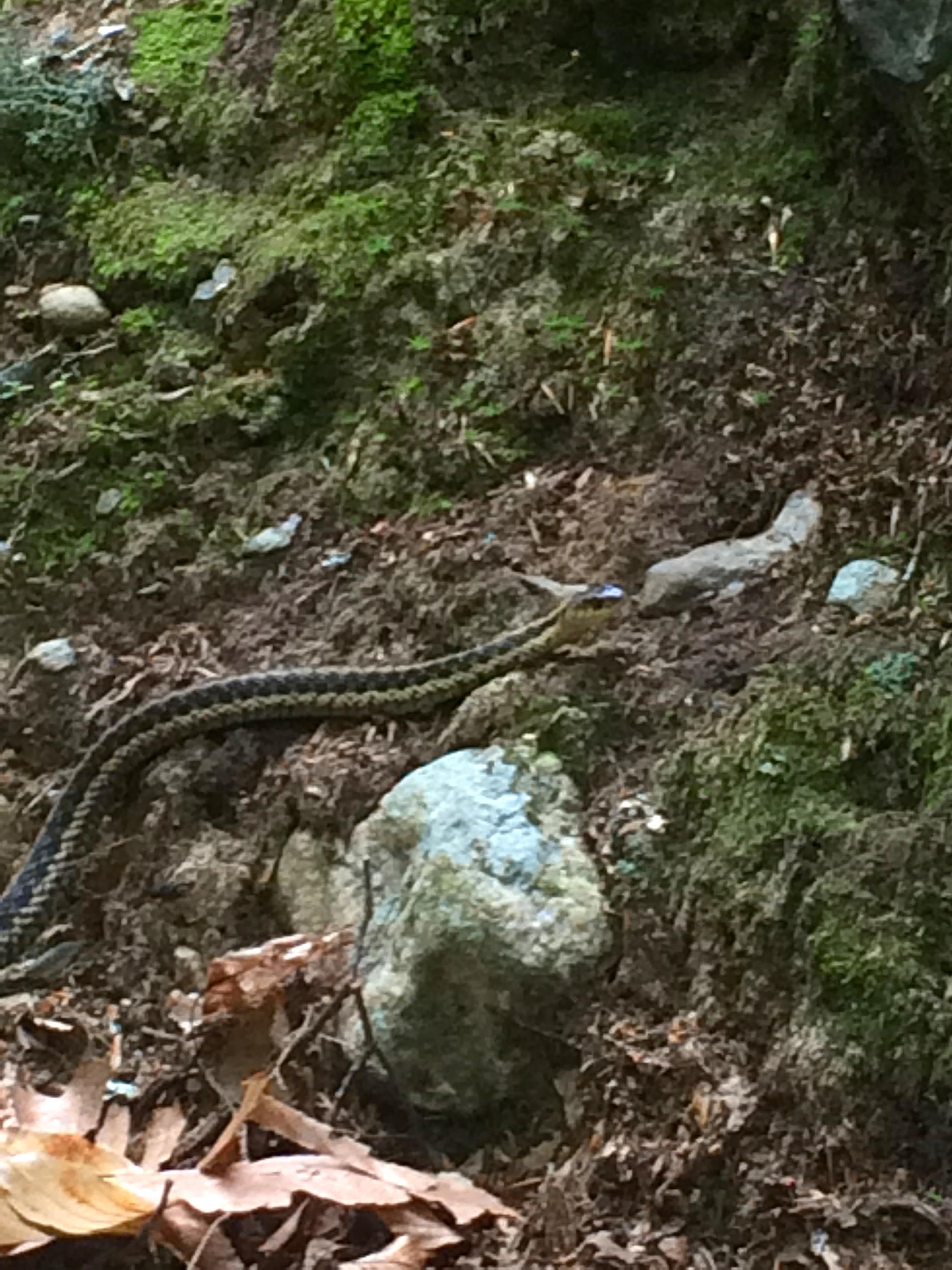 Not a rattlesnake, but cute!