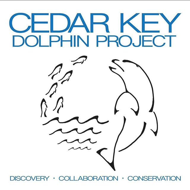 The Cedar Key Dolphin Project is on Instagram! Keep up with the team and all the incredible adventures. 🐬😁 #cedarkey #florida #dolphins #research #marinebiology
