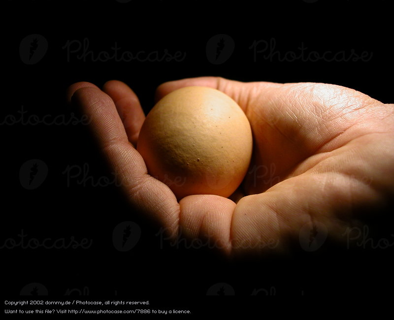 7886-hand-warmth-fingers-safety-physics-egg-photocase-stock-photo-large.jpeg