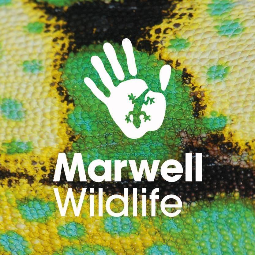 Marwell Wildlife Zoo.jpg