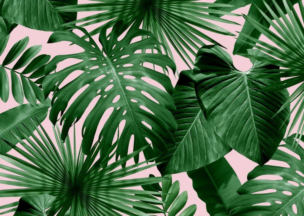 palm-leaf-wallpaper-fantasy-tittle-with-littleone-me-regarding-9.jpg