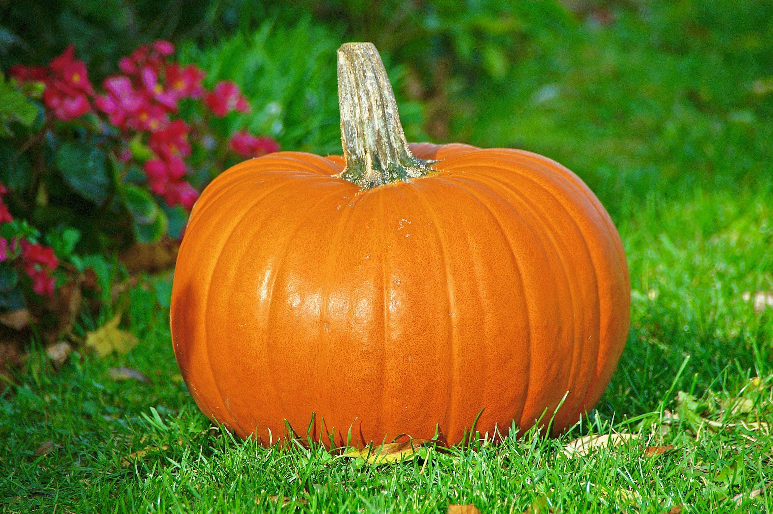 Pumpkin (1).jpg