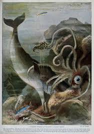 MJS GiantSquid&SpermWhaleWikiComm.jpeg