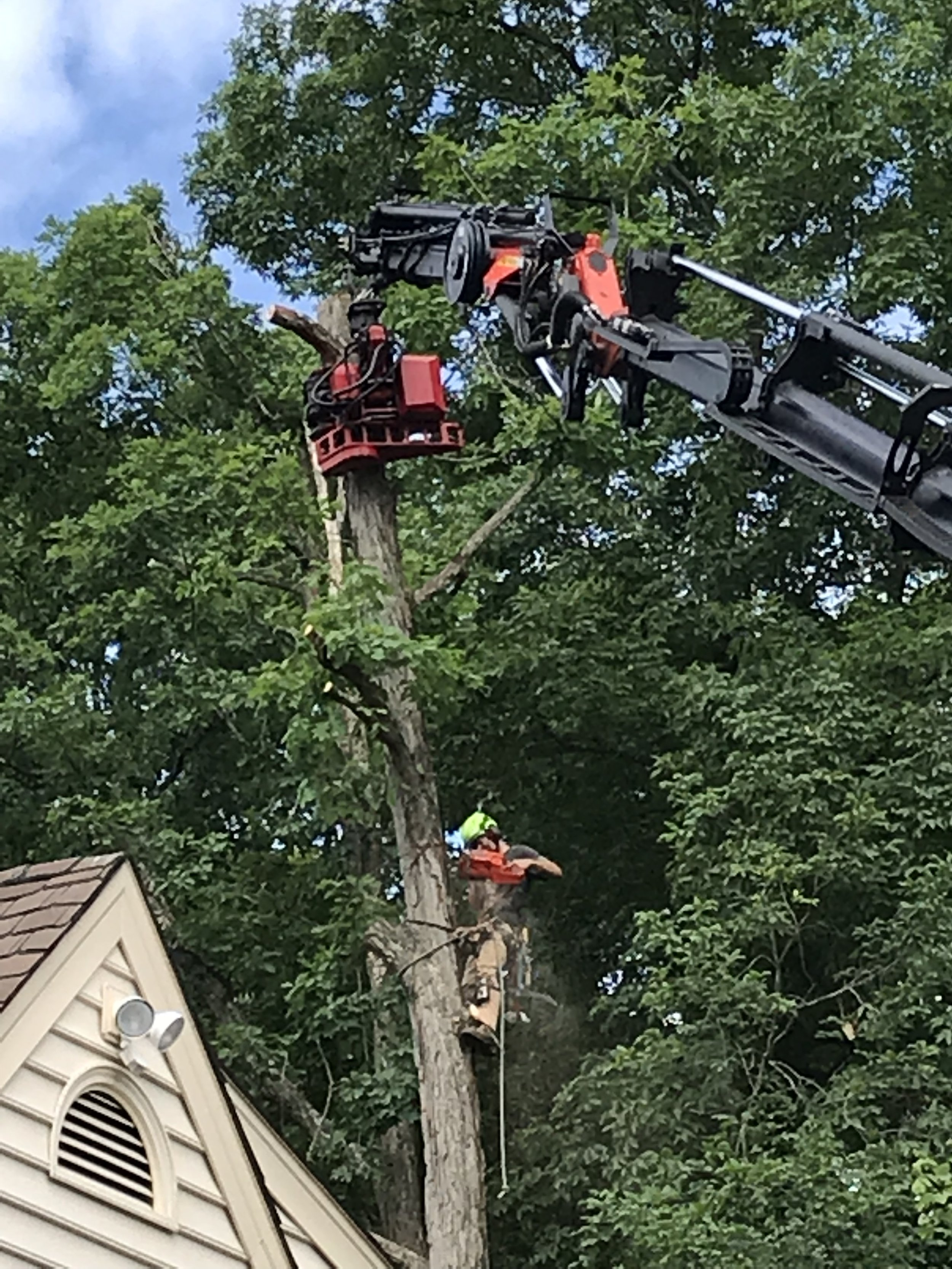 The other day we removed a White Oak in Clifton, VA. There was evidence of root rot and dieback in the crown. Homeowner decided that it was too close to the house to hang on to.