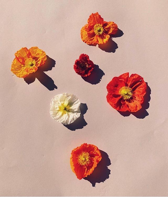 #superbloom inspo via @midland_shop #moodboard #mood