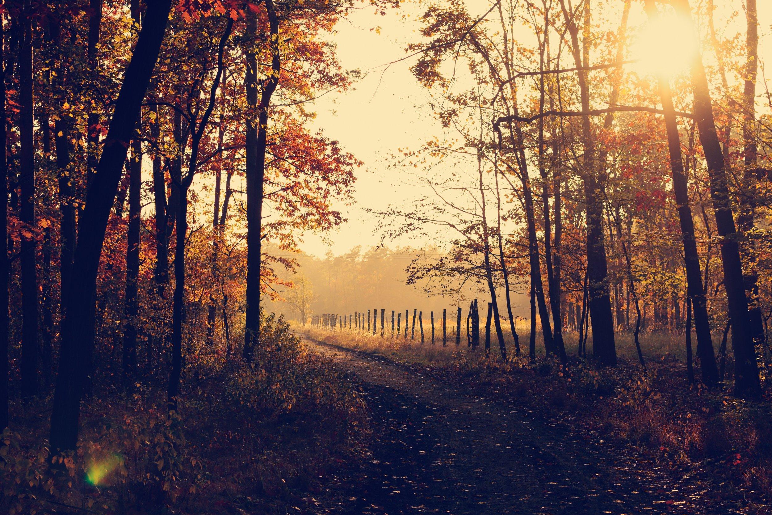 lukasz-szmigiel-41435-unsplash path fall meadow.jpg