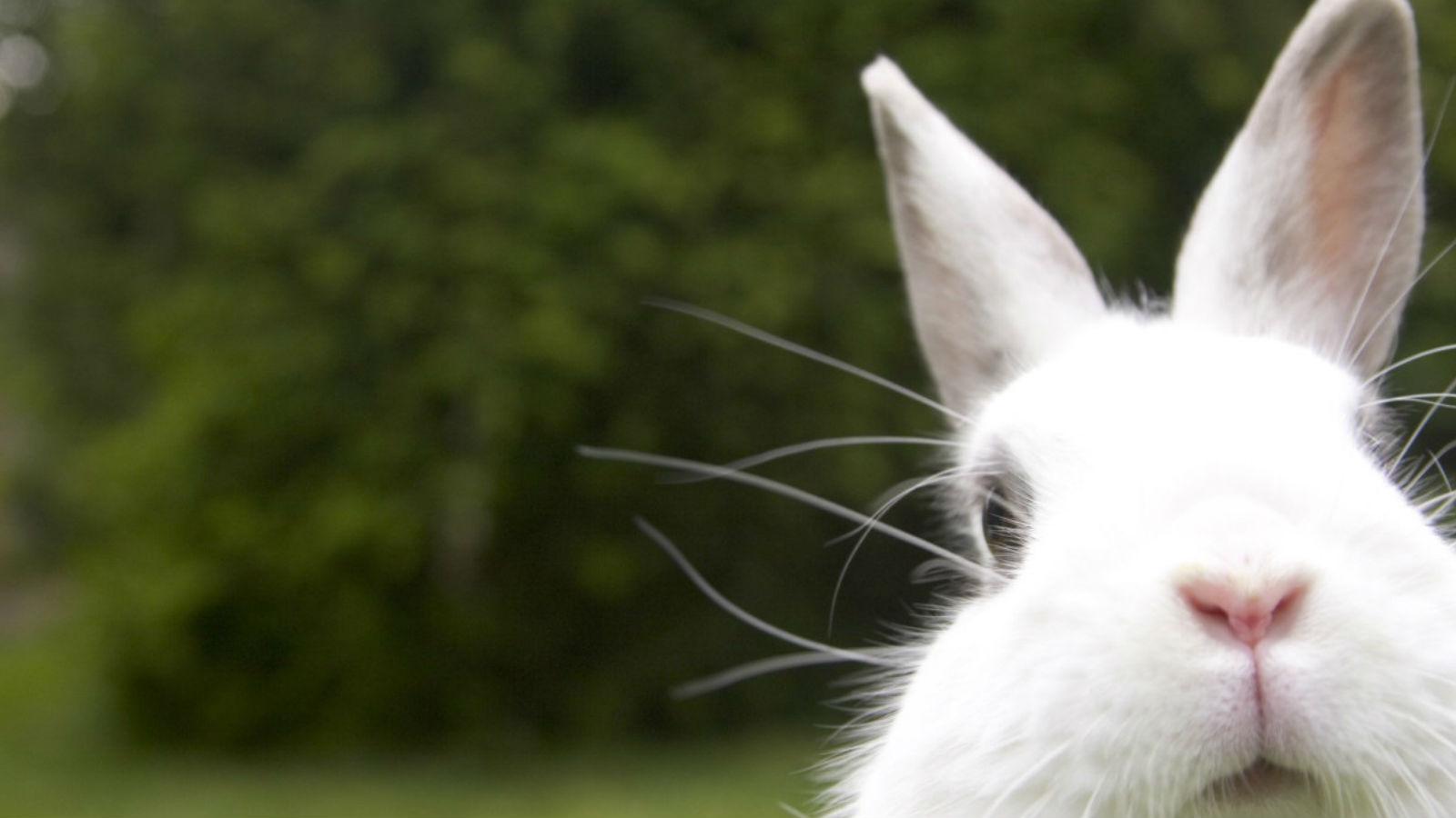 Sheraton Melb Easter - 1600x900.jpg