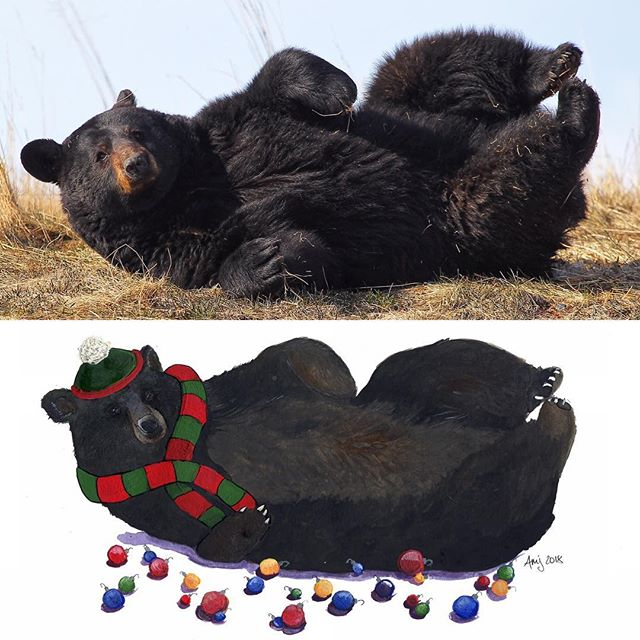 Amazing artist @amandamjorgenson turned my sleepy bear pics into some sweet Christmas cards. Support local art and give her a follow and buy some stuff. . . . #shoplocal #pacificnorthwest #alaska #blackbear #christmas #greetingcards