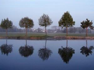 Innovation Trees