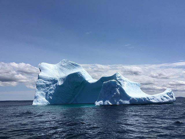 Conception Bay. June 24th! South Bell Island. Beauties.  #icebergs #icebergsnl #explorenl #saltwaterchartersnl #oceanlife #conceptionbay #explorenl #tourismnl