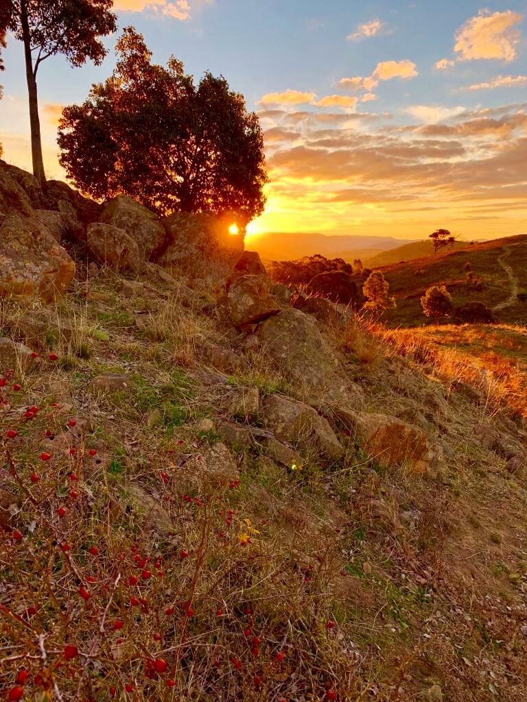 Urambi+sunset+small.jpg
