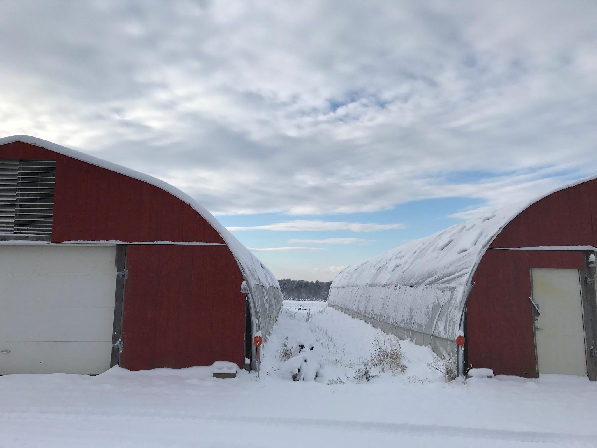 Farm - 1 of 25 (3).jpg