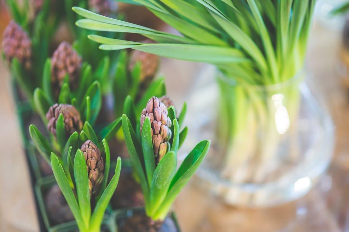 spring-flower-hyacinth.jpg
