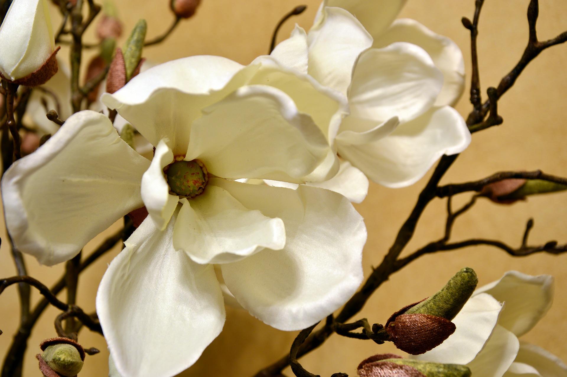 blossom-3827769_1920.jpg