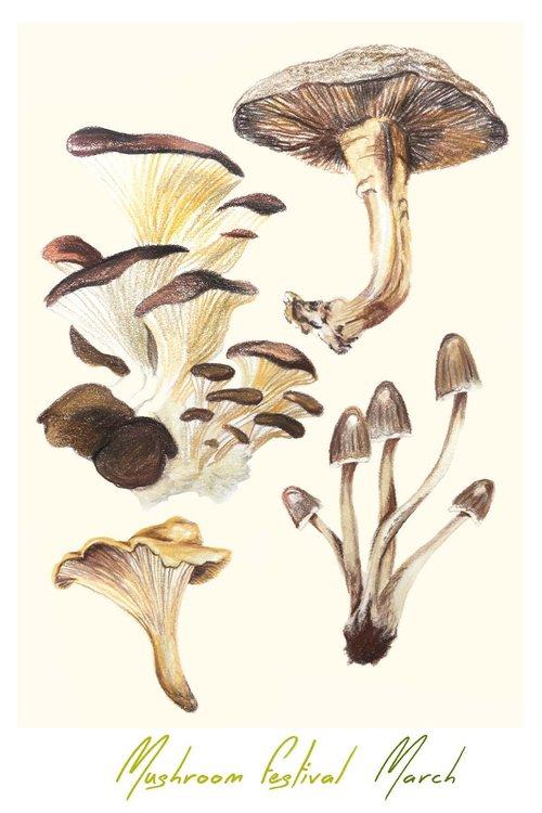 mushroom_fesitvalcard_021419 (1).jpg