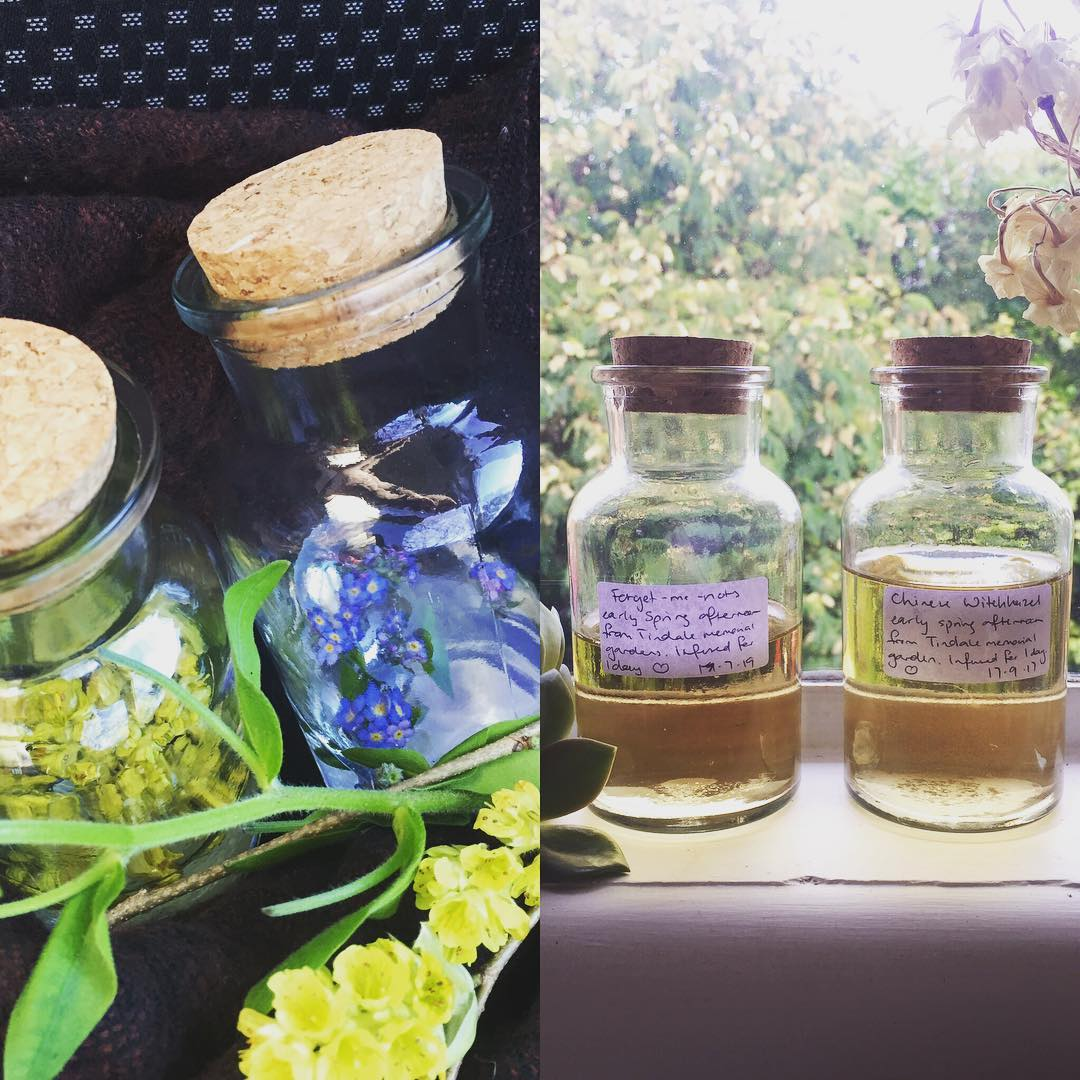 Chinese Witch Hazel & Forget-me-nots
