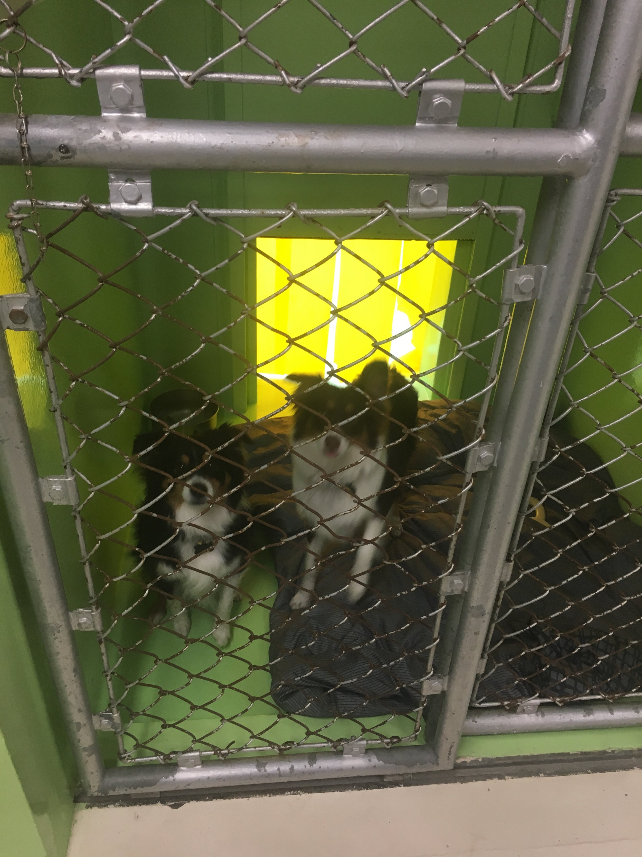 Here are the boys being picked up from their last day in the kennel