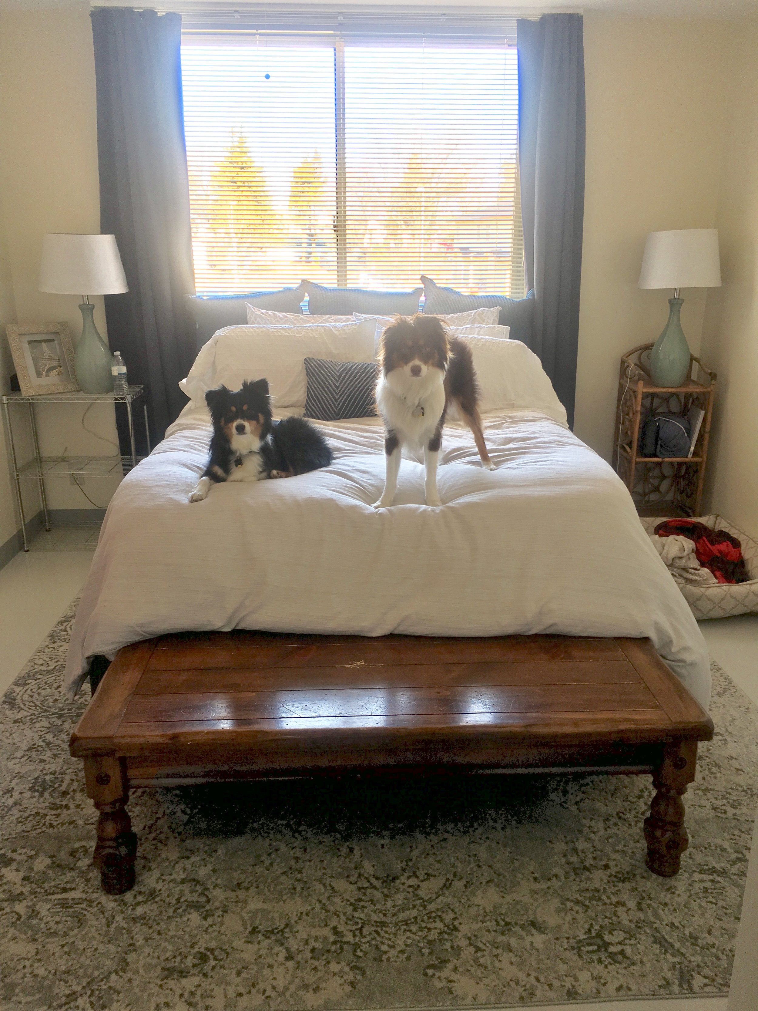 Pups on the Bed.jpg