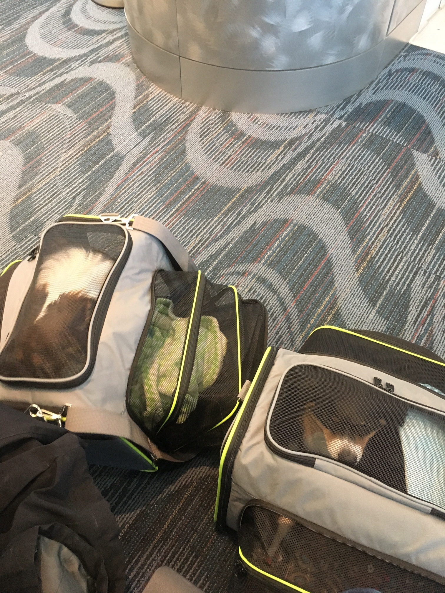 PCS-with-dogs-carry-on-carriers-schuyler-croy.JPG